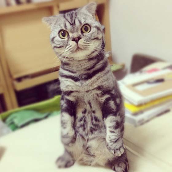 shishi maru gatto (1)