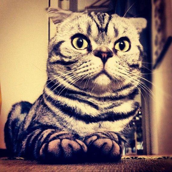 shishi maru gatto (2)