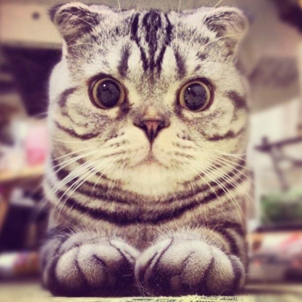 shishi maru gatto (4)