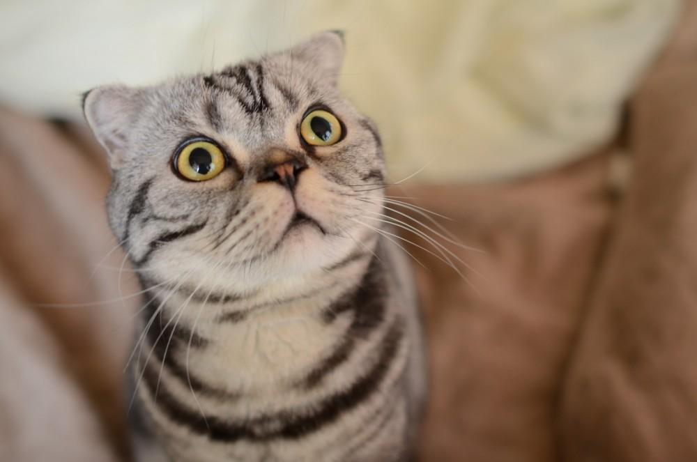 shishi maru gatto (6)