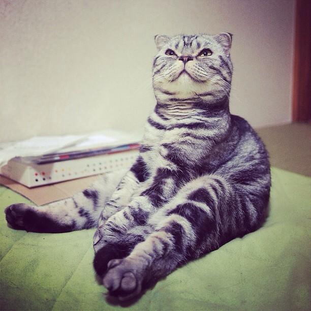 shishi maru gatto (9)