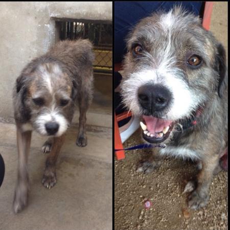 animali abbandonati prima e dopo (10)
