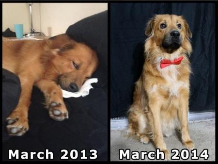 animali abbandonati prima e dopo (13)