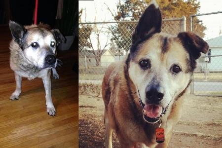 animali abbandonati prima e dopo (16)