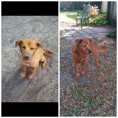 animali abbandonati prima e dopo (18)