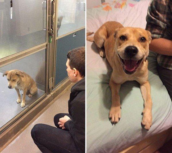 animali abbandonati prima e dopo (2)