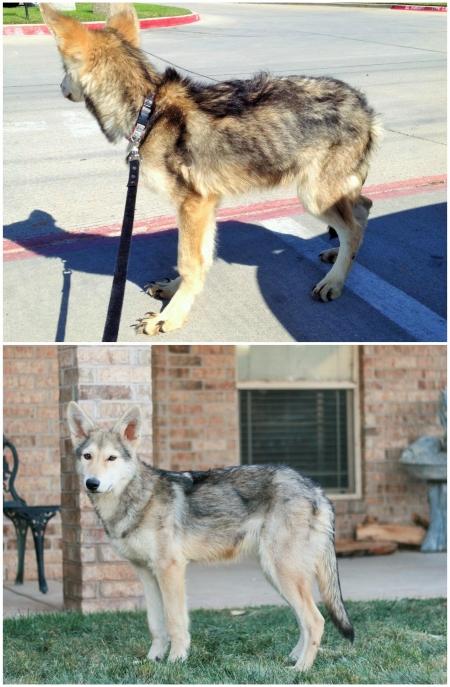 animali abbandonati prima e dopo (4)
