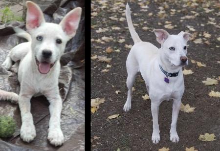animali abbandonati prima e dopo (6)