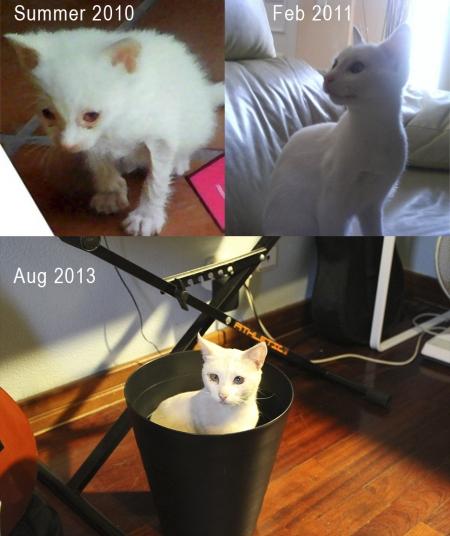 animali abbandonati prima e dopo (8)
