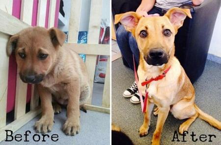 animali abbandonati prima e dopo (9)
