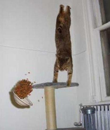 gatti-ninja-4