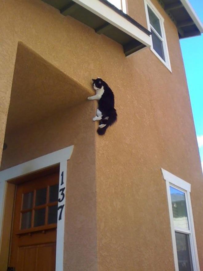 gatti-ninja-5
