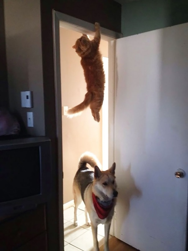 gatti-ninja-7