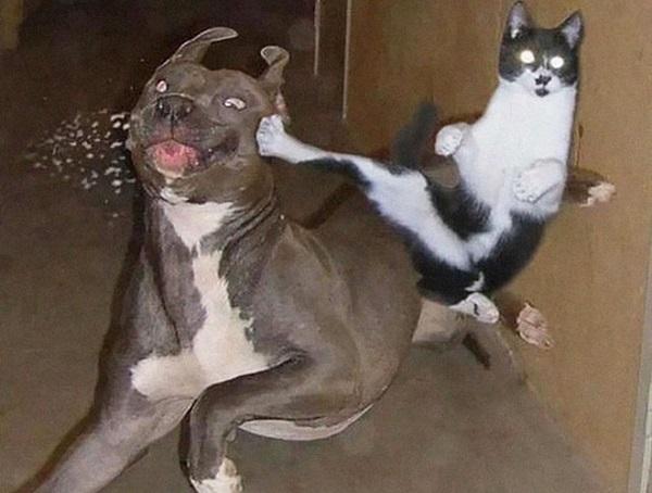 gatti-ninja