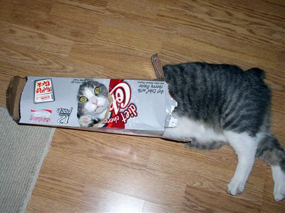 gatti-scatole-1