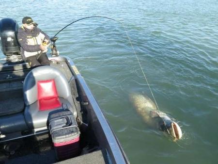 pesce siluro (3)
