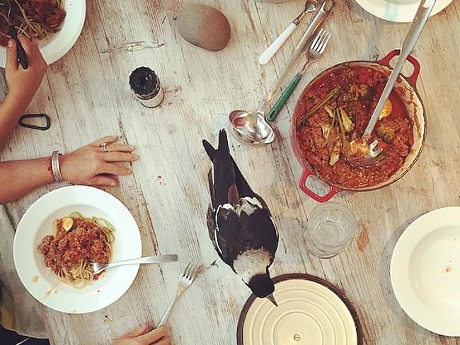 penguin-gazza-famiglia-bloom-instagram-1
