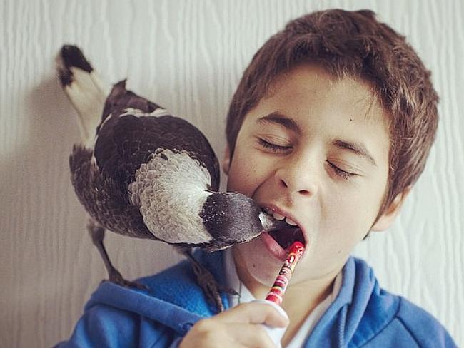 penguin-gazza-famiglia-bloom-instagram-2