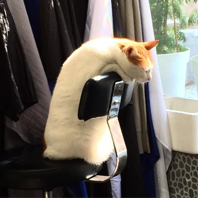 gatti-pisolino-2