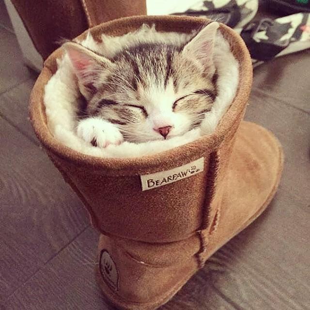 gatti-pisolino-3