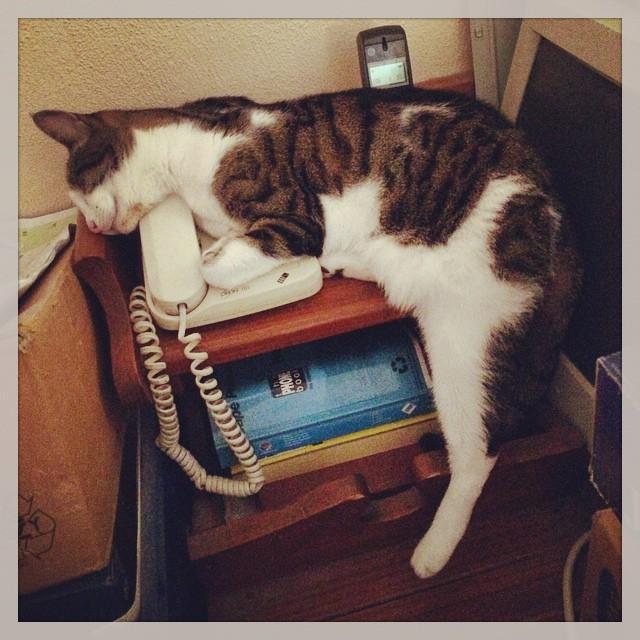 gatti-pisolino-4