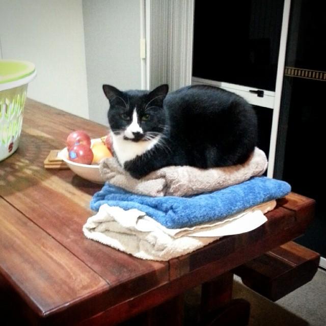 gatti-pisolino-7