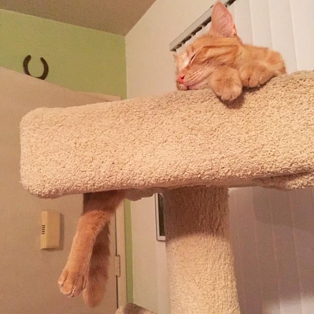 gatti-pisolino-9