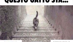 Questo gatto sta salendo o scendendo le scale? E la risposta è….