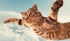 Ecco come i gatti hanno conquistato il mondo (non solo quello del web)