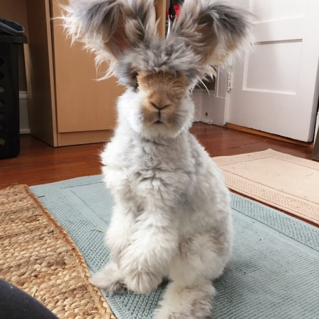 wally-coniglietto (2)