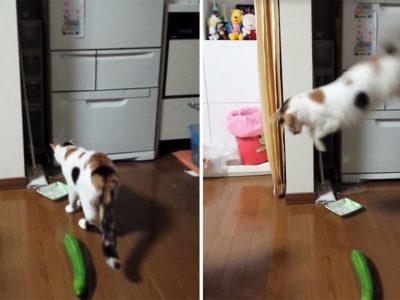 Perchè i gatti hanno paura dei cetrioli? Lo spiega la scienza