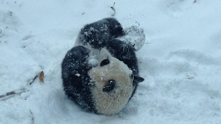 bao bao panda neve