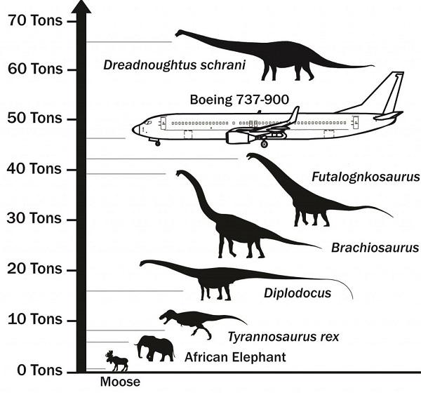 Dreadnoughtus dinosauro