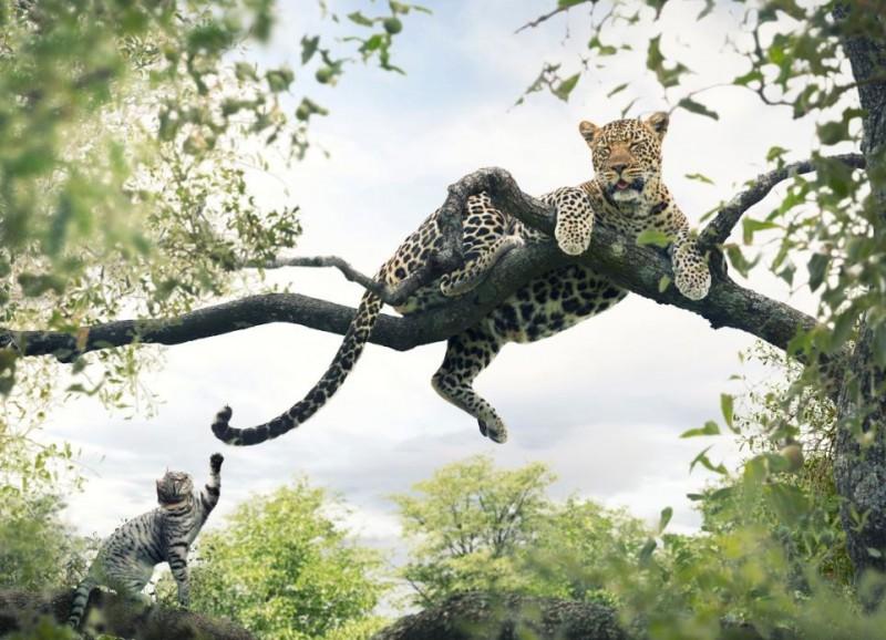 Il gatto nelle terre del Sud Africa