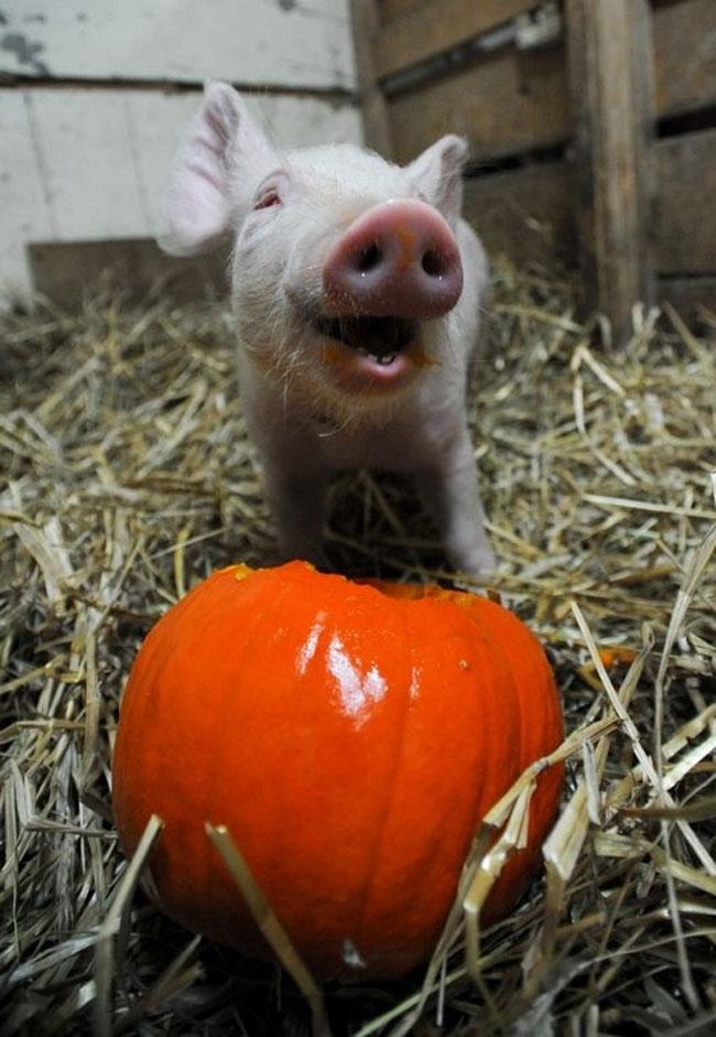 animali felici giornata mondiale felicita