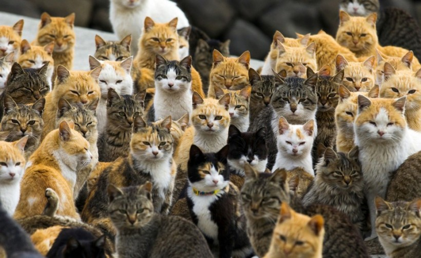 aoshima isola dei gatti giappone