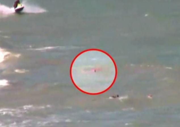 attacco squalo brasile