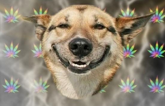 biscotti-cannabis-cani-pet-pot