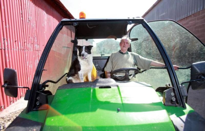 cane-guida-trattore-scozia