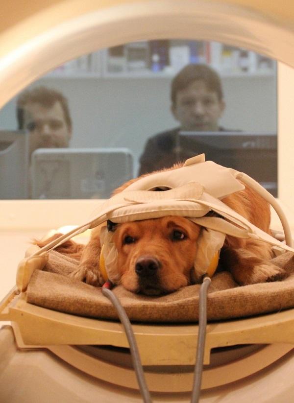 cani essere umani cervello suoni voce