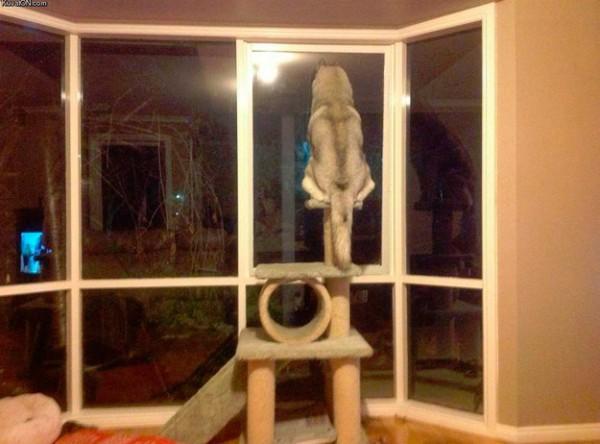 cani-pensano-di-essere-gatti