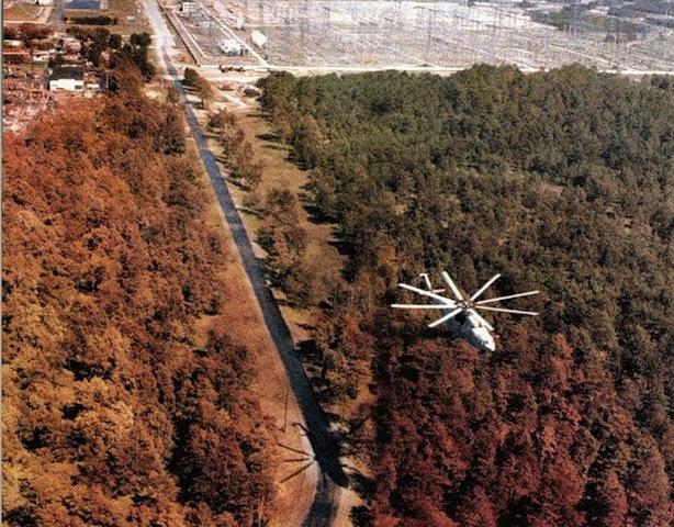 chernobyl alberi morti foresta rossa