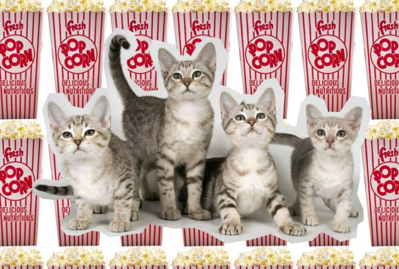 gatti-cinema