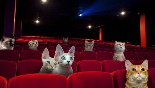cinema-gatti-great-kitten