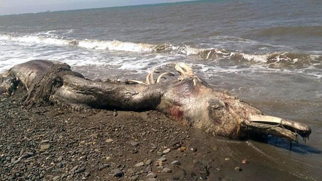 creatura-marina-spiaggiata-russia
