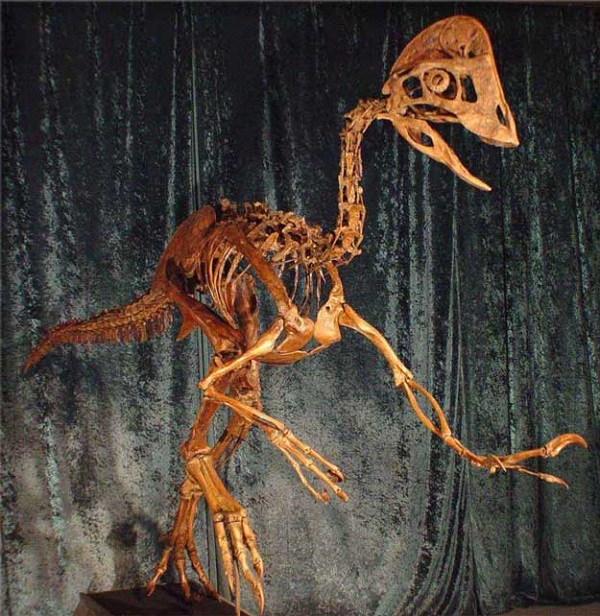 dinosauro pollo infernale Anzu wyliei