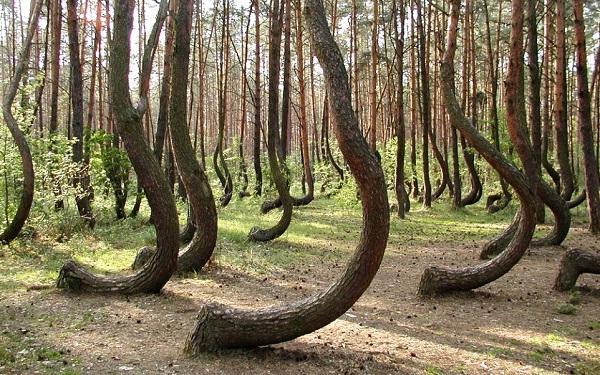 foresta-storta-polonia