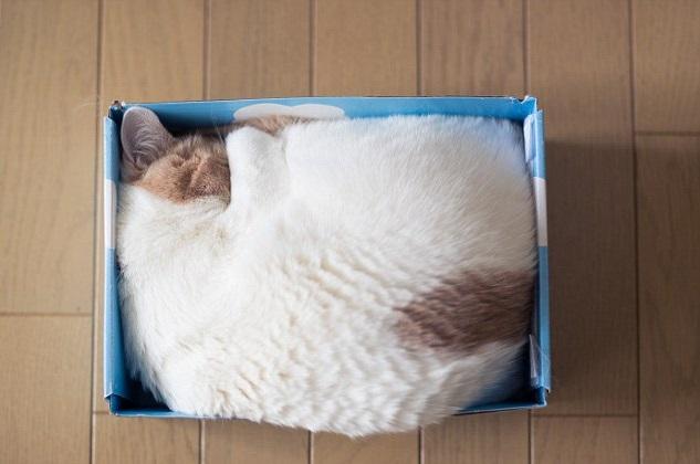 gatti-scatole
