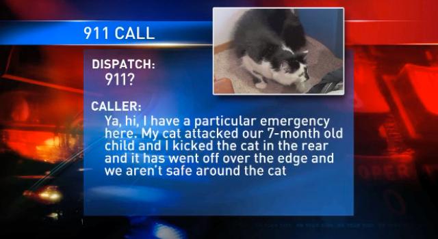 gatto lux attacca famiglia in ostaggio