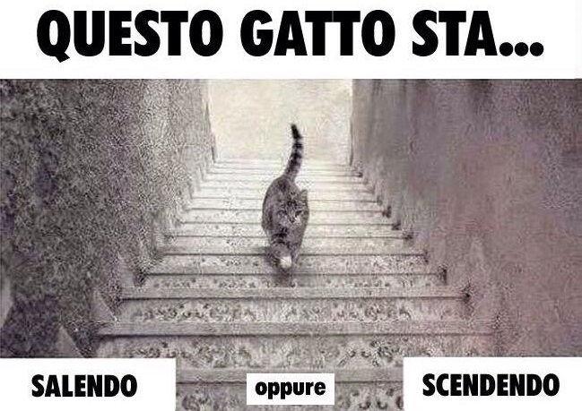 gatto-sale-scende-scale-illusione